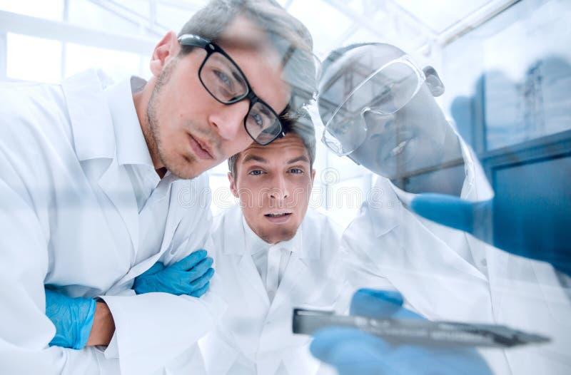 Sluit omhoog een groep wetenschappers die de resultaten van bespreken experimen stock fotografie