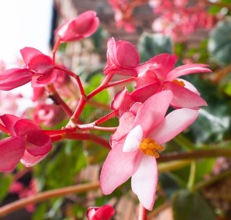 Sluit omhoog en licht aan mooie kleine roze, purpere en rode bloemen royalty-vrije stock fotografie