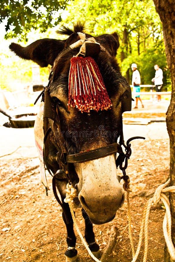 Sluit omhoog ezelsvoorzijde royalty-vrije stock afbeelding