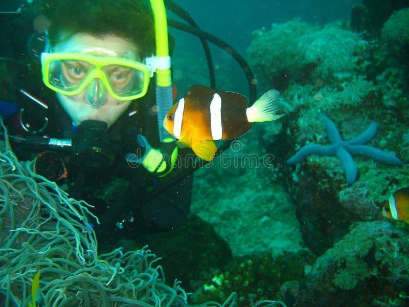 Sluit omhoog foto van de clownvissen De jonge vrouwenscuba-duiker bekijkt de clownvissen royalty-vrije stock afbeelding