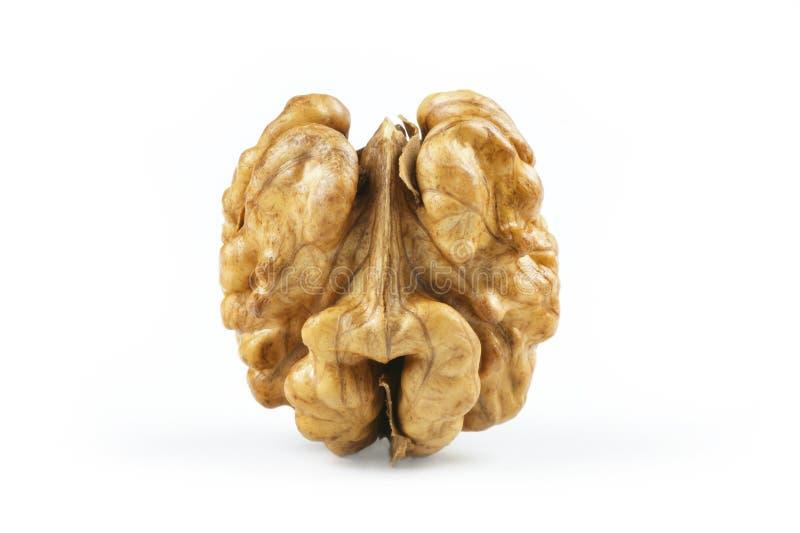 Sluit omhoog gehele okkernootpit zonder shell op witte achtergrond gezond voedsel voor hersenen stock afbeelding