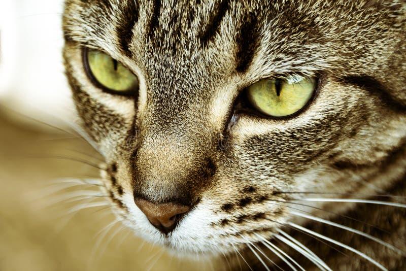 Sluit omhoog geschoten van een kattengezicht die detail tonen royalty-vrije stock foto's