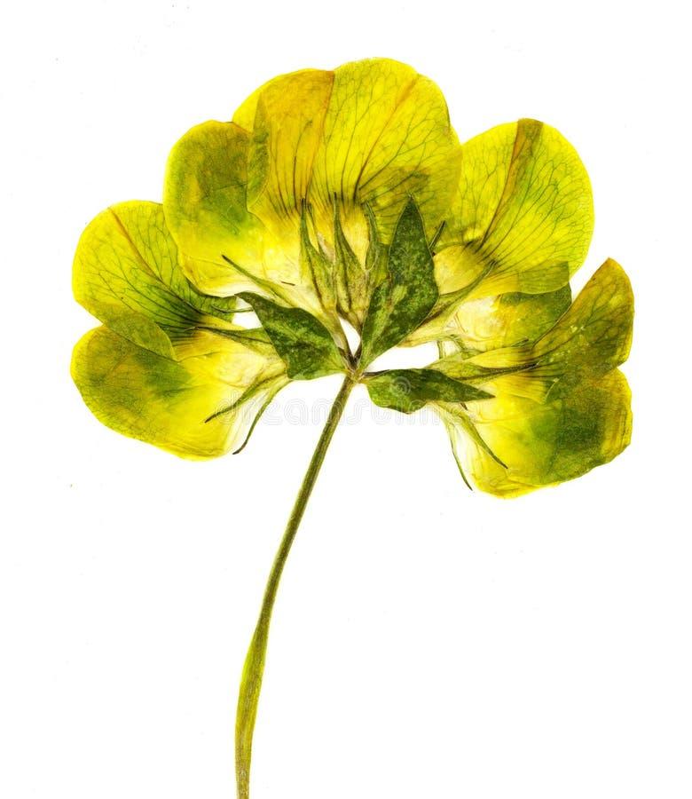 Sluit omhoog geschoten van gedrukte gele bloem royalty-vrije stock afbeelding