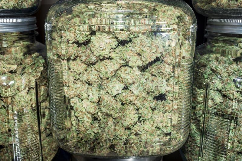 Sluit omhoog Glaskruiken met Groene Marihuanaknoppen die worden gevuld stock fotografie