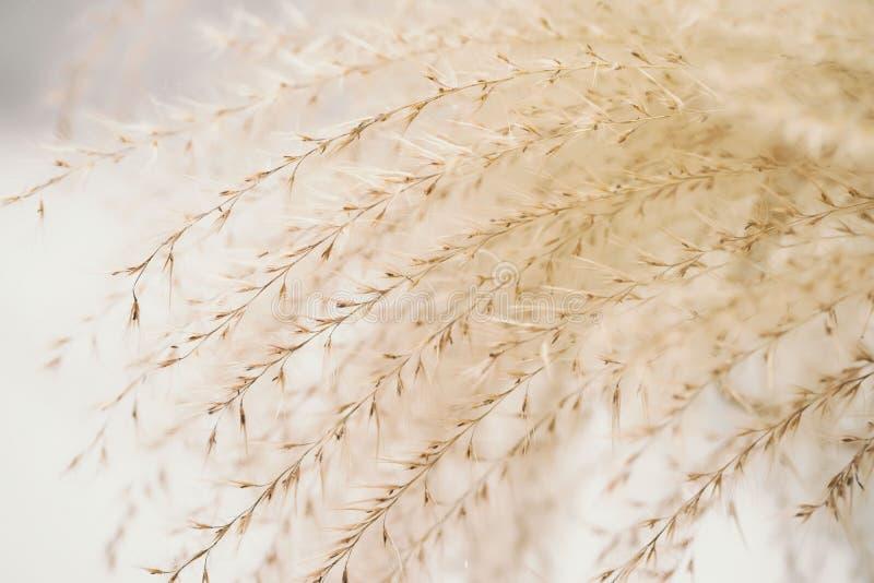 Sluit omhoog gras gelijkend op Stipa Gestemd beeld in retro stijl Uitstekende achtergrond Concept zachtheid, tederheid royalty-vrije stock foto