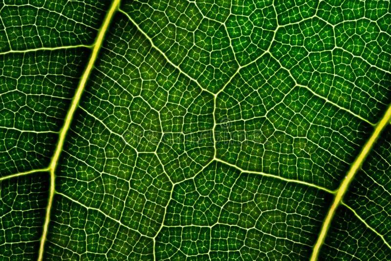 Sluit omhoog groen blad Natuurlijke Groene textuur stock afbeelding