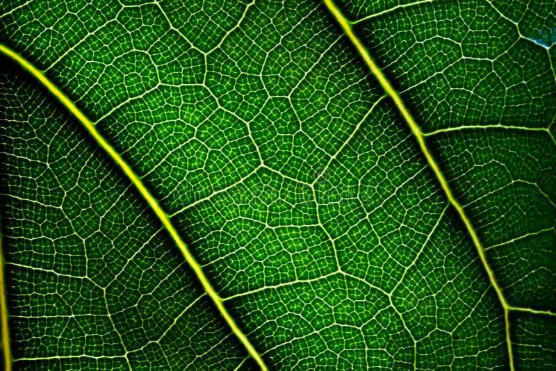 Sluit omhoog groen blad Natuurlijke Groene textuur royalty-vrije stock fotografie
