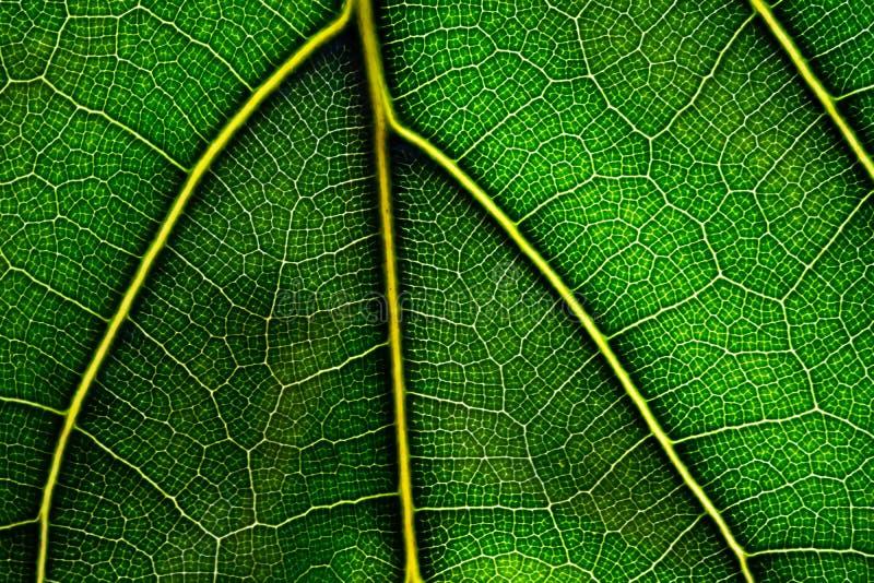 Sluit omhoog groen blad Natuurlijke Groene textuur stock foto