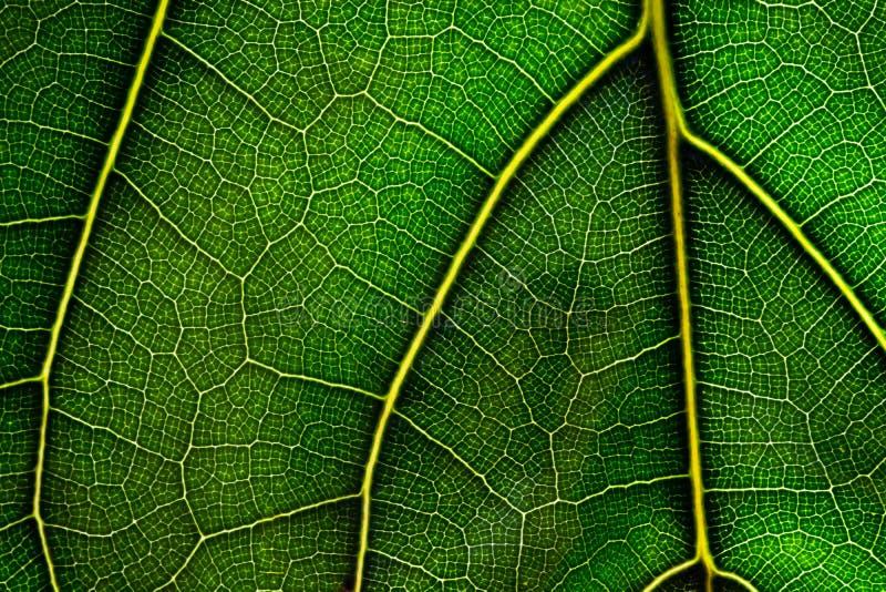 Sluit omhoog groen blad Natuurlijke Groene textuur royalty-vrije stock foto