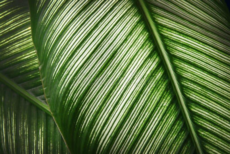 Sluit omhoog Groen detail van bladtextuur stock fotografie