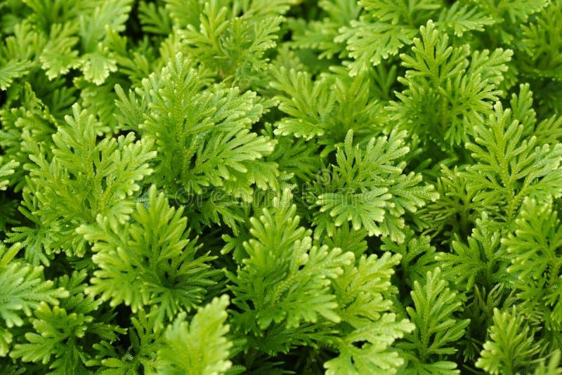 sluit omhoog groen gras in parkachtergrondafbeelding stock afbeelding