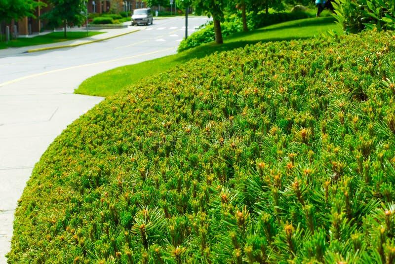Sluit omhoog groene haag in een stad Milieu van de Eco het vriendschappelijke stad stock foto's