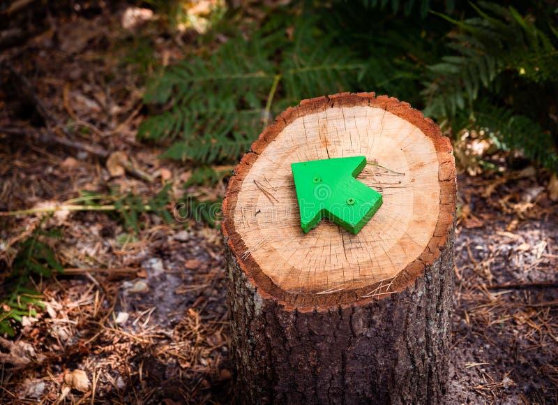 Sluit omhoog groene houten pijl richtend de richting van het voetpad of de sleep in bijlage aan een boomstomp Natuurreservaat, bo stock foto