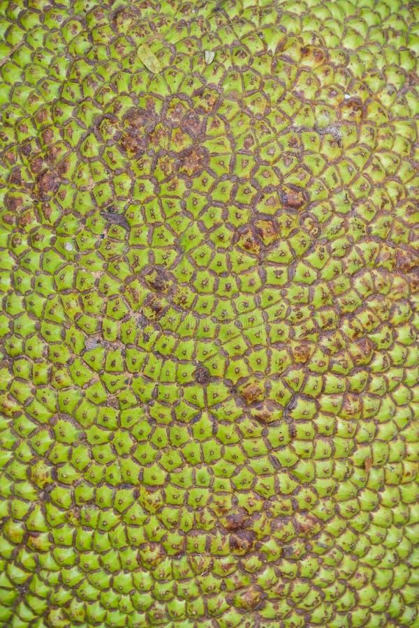 Sluit omhoog groene Jackfruit voor textuur royalty-vrije stock fotografie