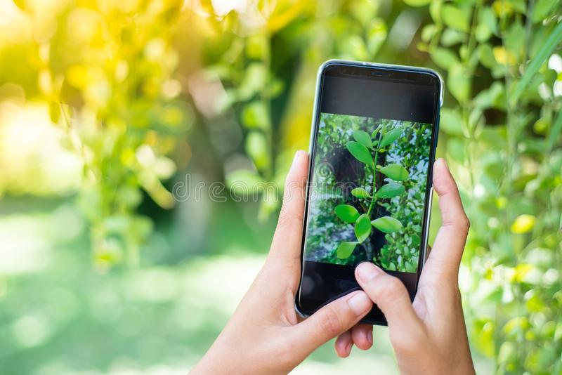 Sluit omhoog handen spelend mobiele telefoon stock foto