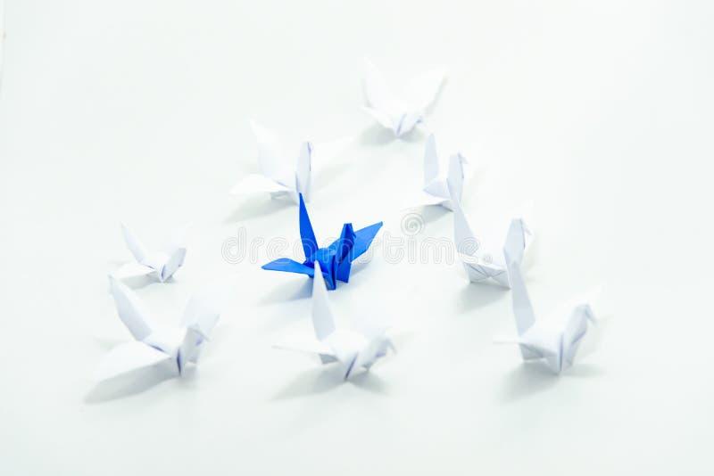 Sluit omhoog het blauwe vogel vliegen verschillend door een groep witte vogel, Leidingsconcept stock foto
