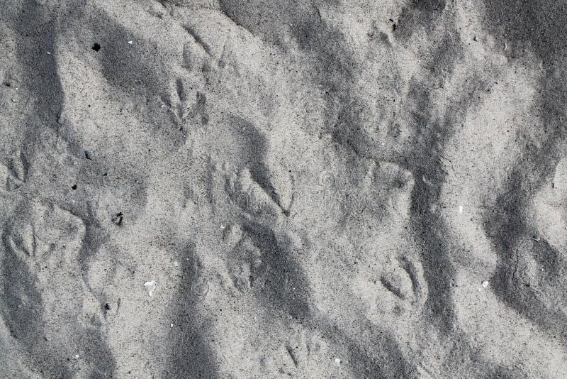 Sluit omhoog hoge resolutieoppervlakte van zand bij een strand royalty-vrije stock afbeelding