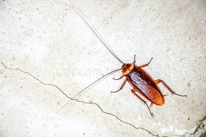 Sluit omhoog kakkerlak royalty-vrije stock afbeeldingen