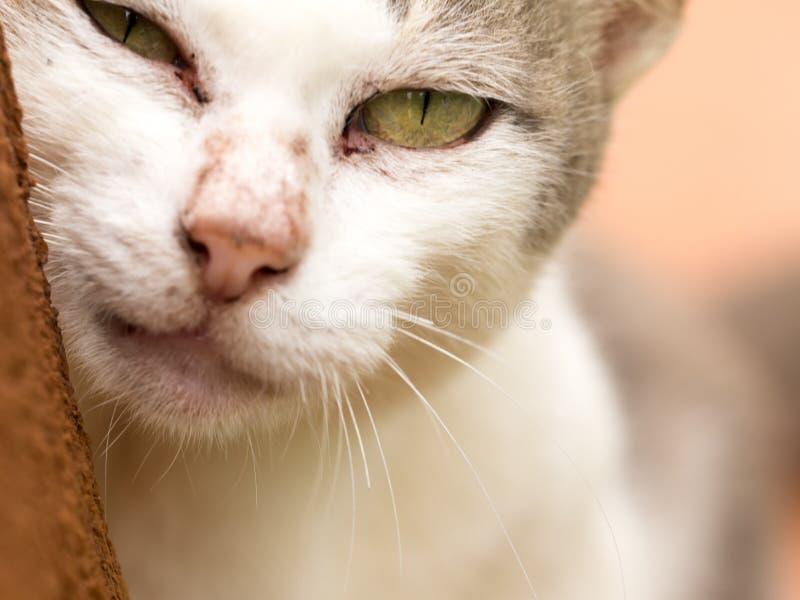 Sluit omhoog kattengezicht royalty-vrije stock foto