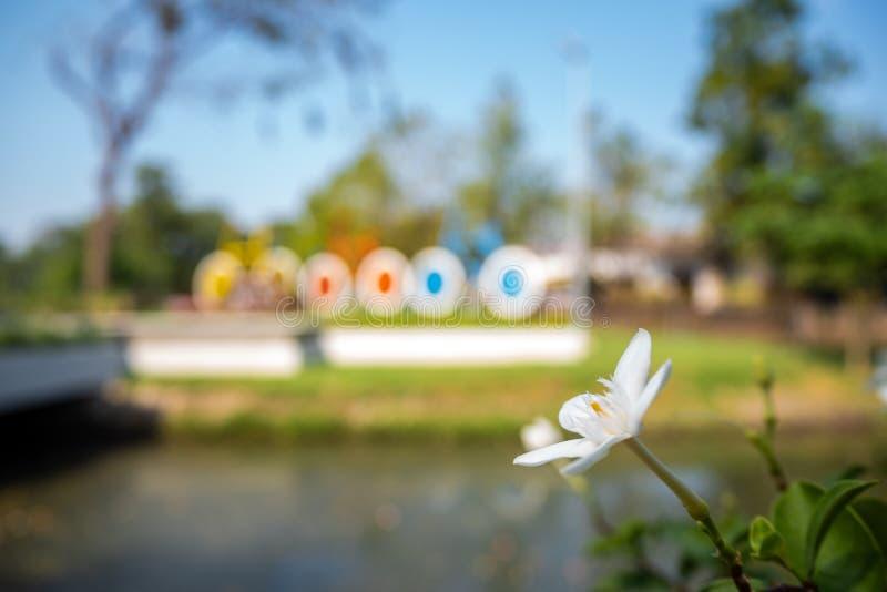 Sluit omhoog leuke kleine bloeiende bloem met vage voorzijde van de parkachtergrond stock foto's
