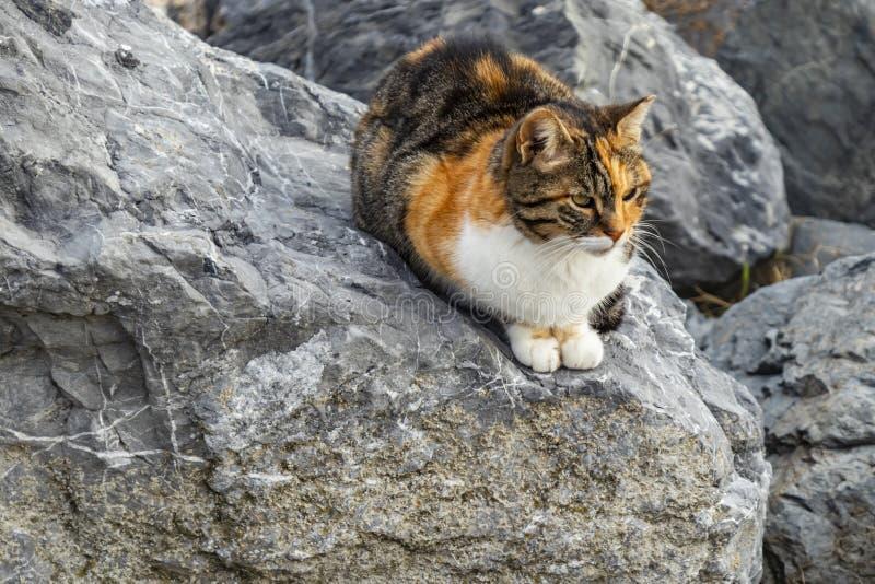 Sluit omhoog leuke vriendenkatten stock afbeelding