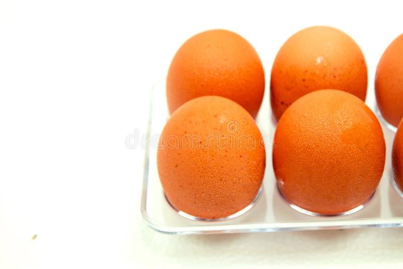 Sluit omhoog macro bij Koude bruine Eieren met druppeltje op witte achtergrond stock foto's