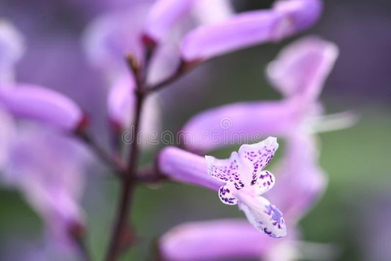 Sluit omhoog macro purpere grasbloem royalty-vrije stock foto