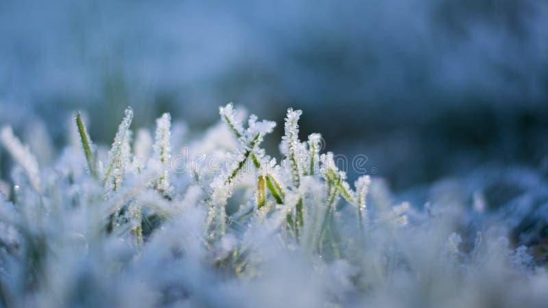 Sluit omhoog Macrobeeld van mooie ijskristallen op bladen van groen gras in de winter stock fotografie
