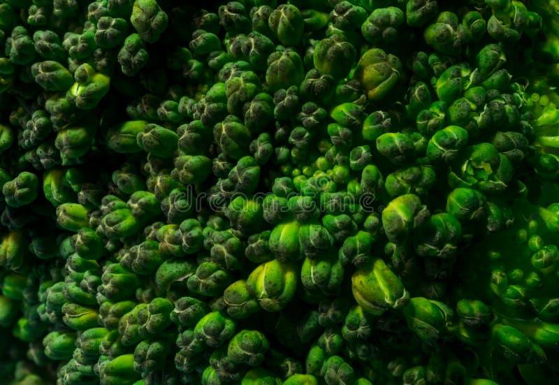Sluit omhoog Macrotextuur van Natuurlijk Organisch Brocolli-Bovenste gedeelte royalty-vrije stock afbeeldingen
