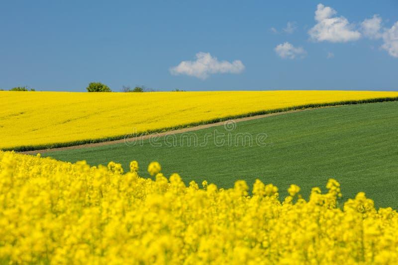 Sluit omhoog mening aan geel raapzaadgebied en landschap stock fotografie