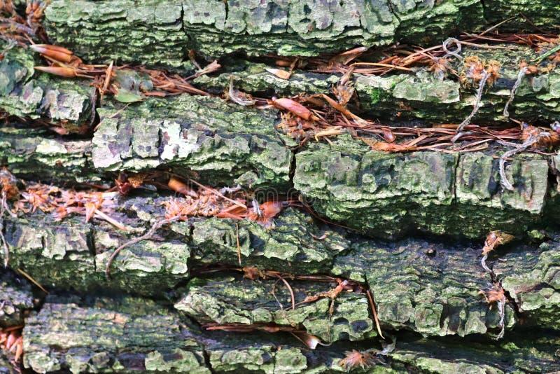 Sluit omhoog mening over prachtig gedetailleerde boomschors van eiken en andere bomen royalty-vrije stock foto's