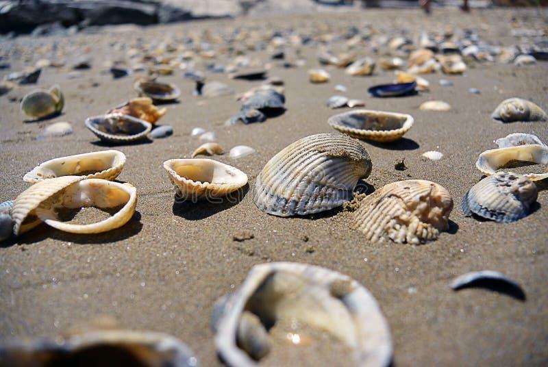 Sluit omhoog mening over zeeschelpen op het strand in het zand in zonnige dag royalty-vrije stock afbeeldingen