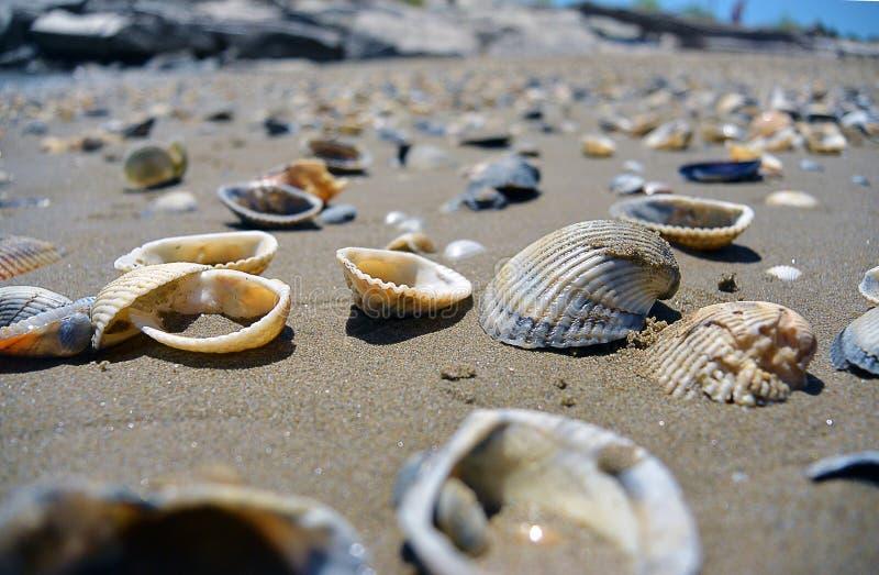 Sluit omhoog mening over zeeschelpen op het strand in het zand in zonnige dag stock foto