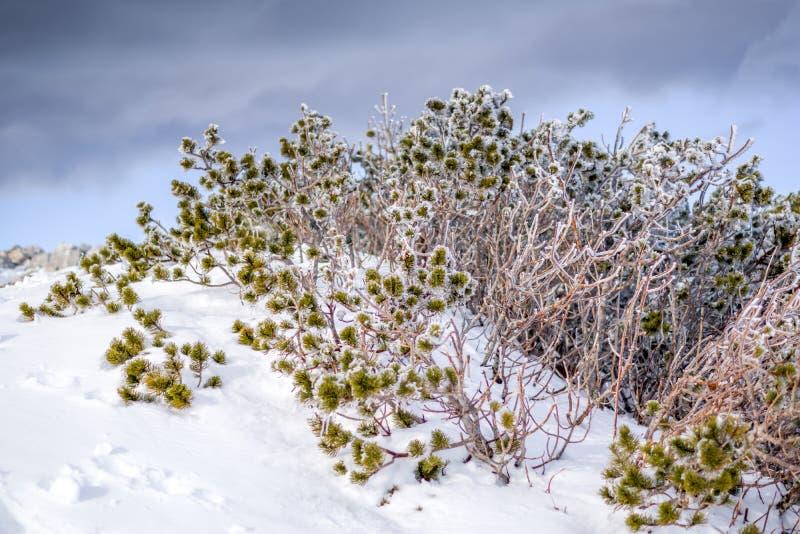 Sluit omhoog mening van bevroren struik bij de bovenkant van berg De winter scen royalty-vrije stock foto's