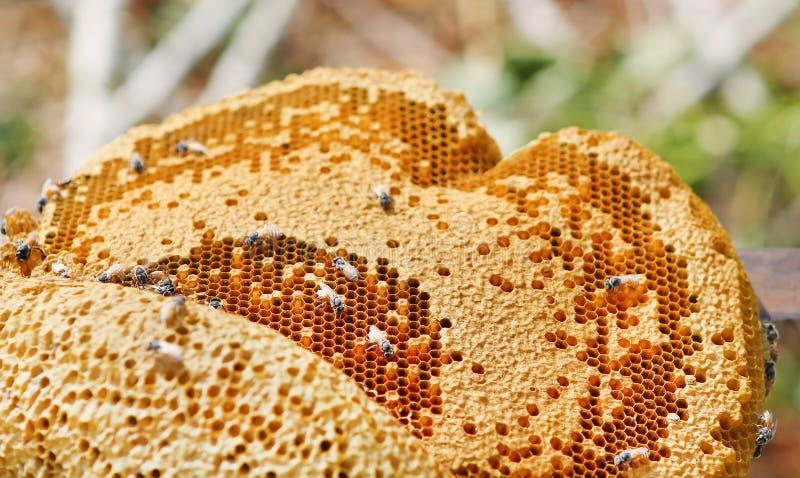 Sluit omhoog mening van de het werk bijen op honingscellen, Honingraat met bijen en honing royalty-vrije stock foto's