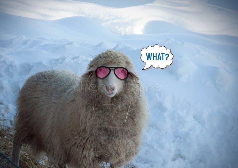 Sluit omhoog mening van een het kijken schaap in de winterdag Kijkend koele schapen met roze glazen royalty-vrije stock foto's