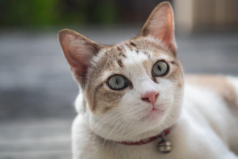 Sluit omhoog mening van een leuke kat, selectieve nadruk stock afbeeldingen