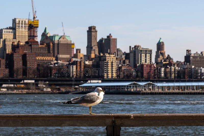Sluit omhoog mening van een zeemeeuwtribune op omheining met achtergrond van de Hoogten van Brooklyn van de rivierkant van het oo royalty-vrije stock afbeeldingen