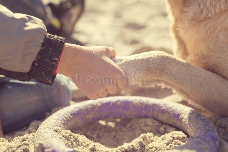 Sluit omhoog mening van jonge jongen die zijn hondenpoot met het hondenstuk speelgoed houden op het zand stock fotografie