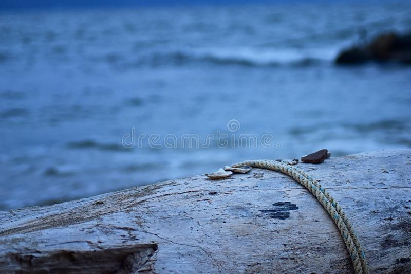 Sluit omhoog mening van Overzeese Shells, rotsen en Kabel op Logboekstrand met Vreedzame Oceaan vaag op achtergrond van strand in royalty-vrije stock afbeeldingen