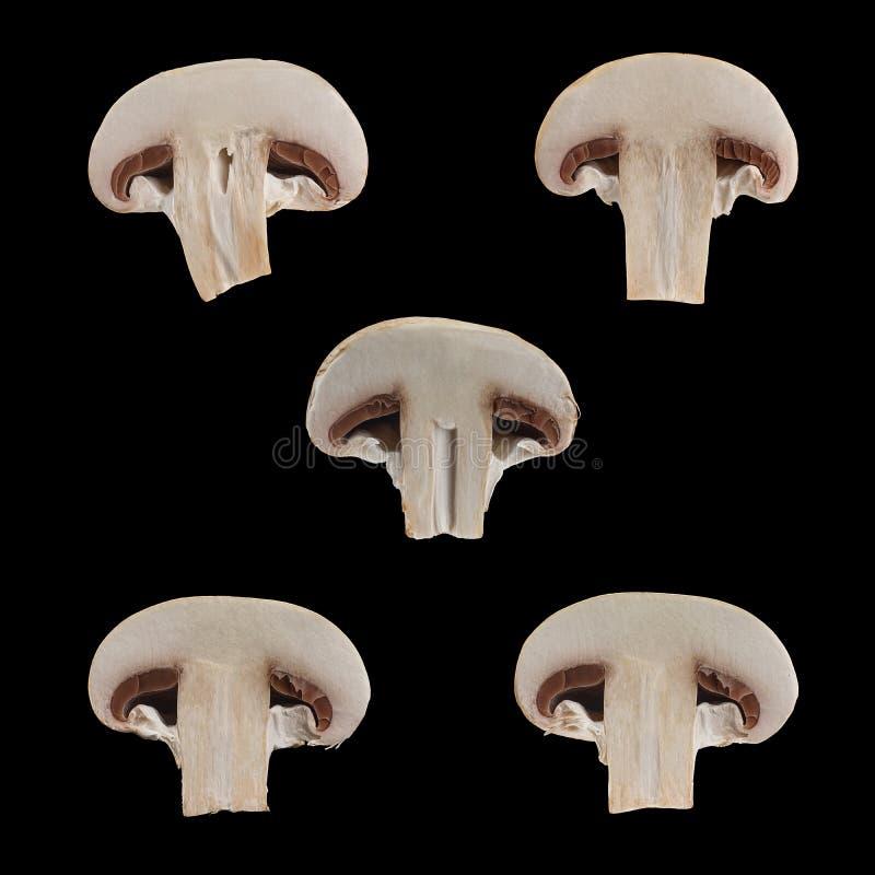 Sluit omhoog mening van twee geïsoleerde gesneden bruine champignons op zwarte achtergrond stock fotografie