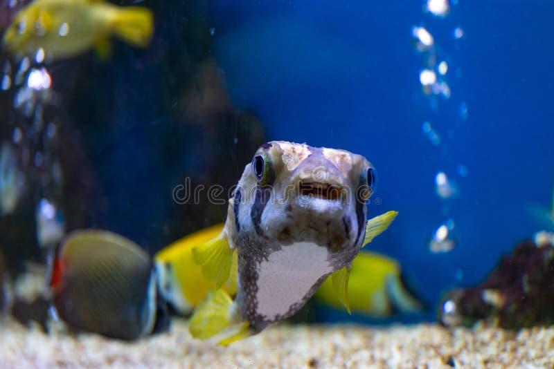 Sluit omhoog mooie vissen in het aquarium stock afbeeldingen