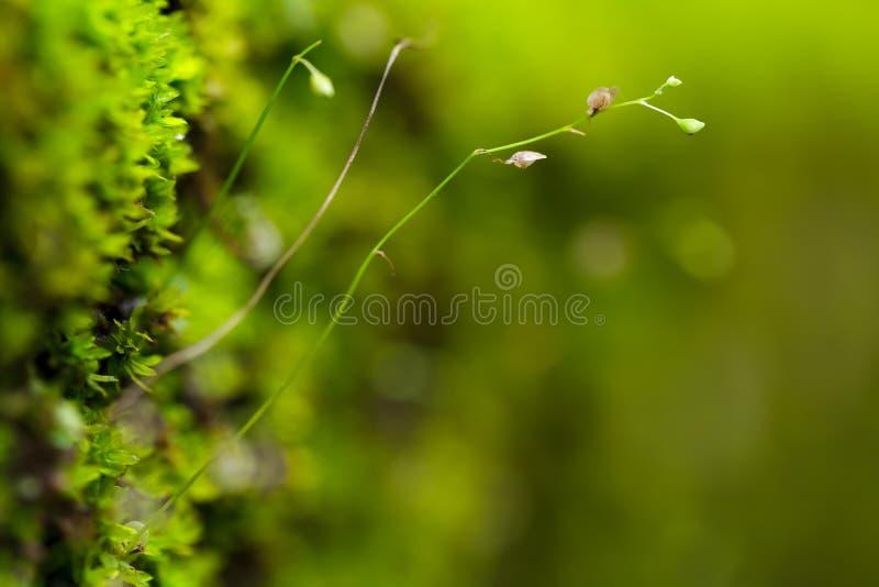 Sluit omhoog mos stock foto