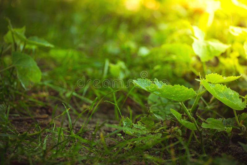 Sluit omhoog op bosgrondflora met groene installaties en gras stock afbeelding