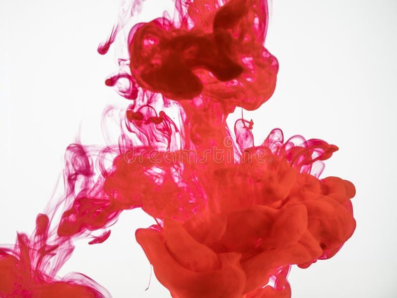 Sluit omhoog op druppeltje van rode inkt in water Beweging van rode inkt onder water, een abstracte achtergrond Rode acrylkleur royalty-vrije stock foto