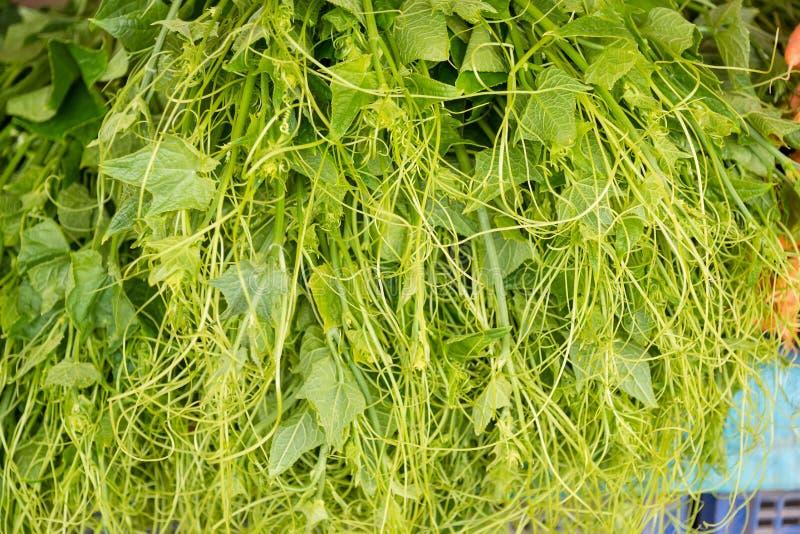 Sluit omhoog Organische groente, piek van chayote in de markt Thailan stock foto