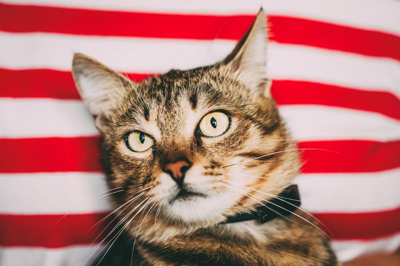 Sluit omhoog Portret Tabby Male Kitten Cat stock afbeeldingen