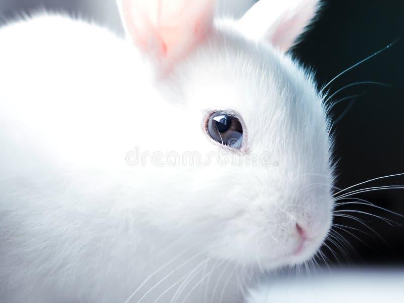 Sluit omhoog portret van leuk konijntje royalty-vrije stock afbeelding