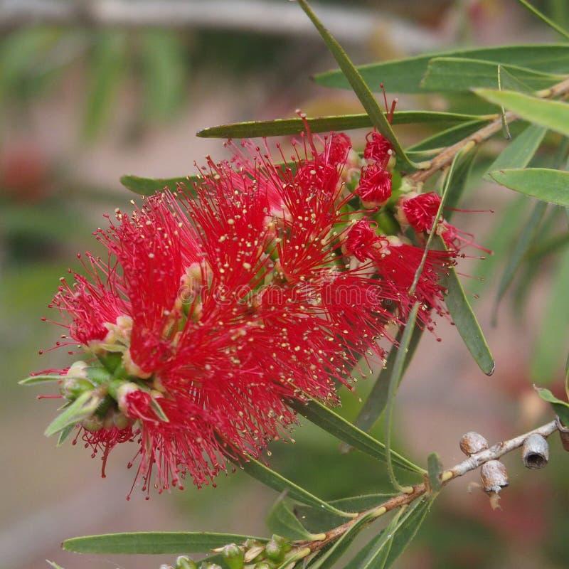 Sluit omhoog rode bloem royalty-vrije stock afbeeldingen