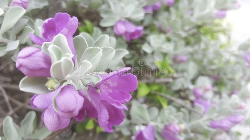 Sluit omhoog roze heldere bloemen op onscherpe groene achtergrond royalty-vrije stock afbeeldingen